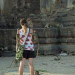 Lop buri_monkey_climbing