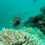 lionfish_thailand_diving
