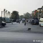 lop buri_monkey_street
